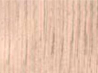 NW21-Australian-Pine